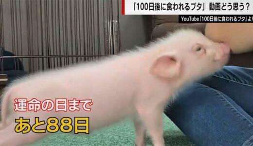 【胸糞】「100日後に食われる豚」チャンネルに思うこと